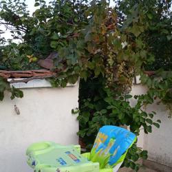 Детско бебешко столче стол за хранене Giordani Pappa Comfort