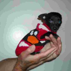 Пуловери за дребни породи кученца