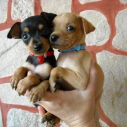 Декоративни нашийници за малки кученца и котенца