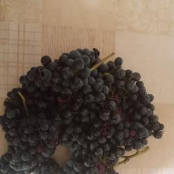 Продавам винено грозде сорт мерло
