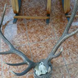 Еленови рога с 6 разклонения, върху подложка - красив подарък